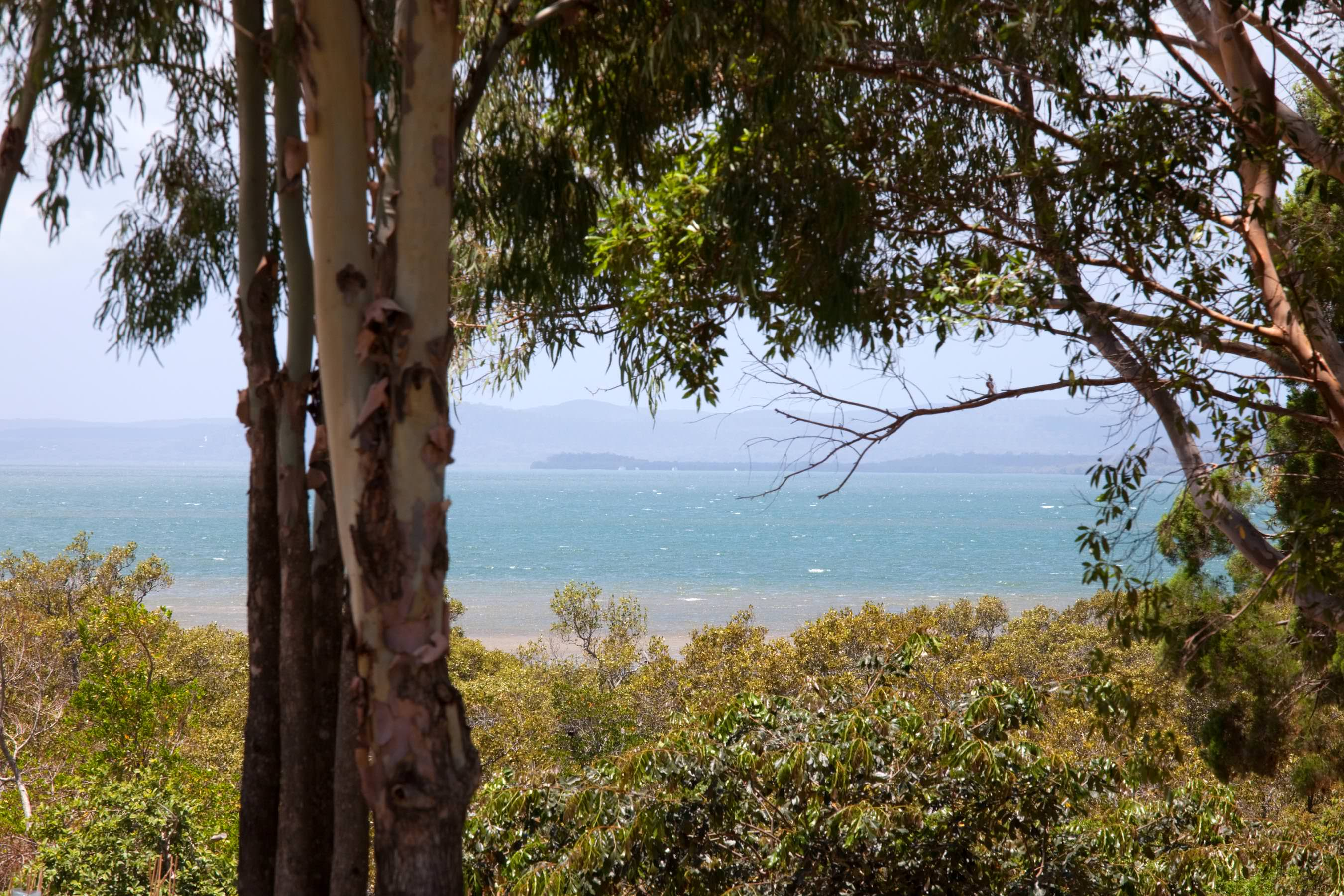 Bay through the gums