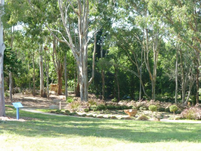 Grove of gum trees